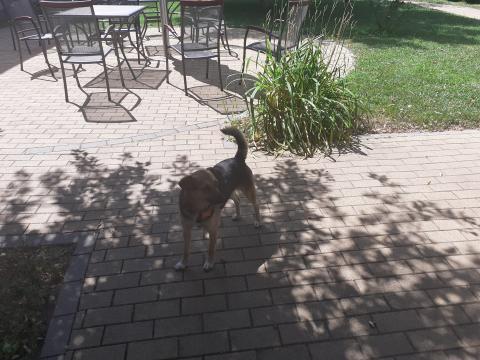 Telma kutyus az udvarban