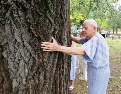 Mindenki megölelheti az óriás fát